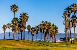 Palmträd i den Venedig stranden Arkivbilder