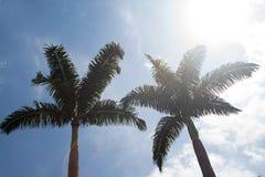 Palmträd i den Venezuela semestern Royaltyfri Foto