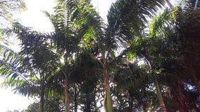 Palmträd i den Venezuela semestern Arkivbild