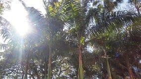 Palmträd i den Venezuela semestern Arkivfoto