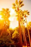 Palmträd i djungel Arkivfoto