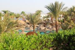 Palmträd i Egypten härligt vegetationlandskap royaltyfria bilder
