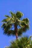 Palmträd i en cirkel Arkivfoto