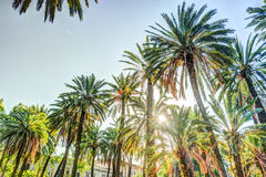 Palmträd i en tropisk semesterort på den härliga soliga dagen Arkivbild