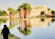 Palmträd i Fez, Marocko Royaltyfri Fotografi