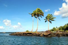 Palmträd i Fiji Royaltyfri Fotografi