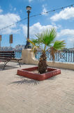 Palmträd i Gzira, Malta Arkivbilder