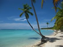 Palmträd i karibisk strand royaltyfria foton