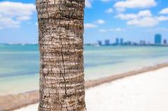 Palmträd i Key Biscayne Arkivfoto