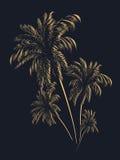 Palmträd i konturer Royaltyfri Bild