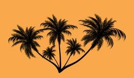 Palmträd i konturer Royaltyfria Foton
