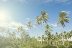 Palmträd i ljus sol av den tropiska ön blå sky för bakgrund Arkivfoto