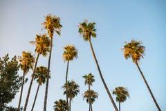 Palmträd i Los Angeles Royaltyfri Foto