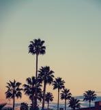 Palmträd i Los Angeles fotografering för bildbyråer