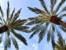 Palmträd i luften royaltyfria foton