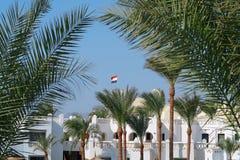 Palmträd i lyxigt hotell Arkivbilder