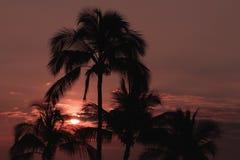 Palmträd i Maui Hawaii på solnedgången Royaltyfri Bild