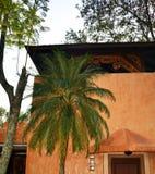 Palmträd i Mexico royaltyfri fotografi