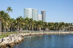 Palmträd i Miami Royaltyfria Bilder
