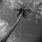 Palmträd i molnen Fotografering för Bildbyråer