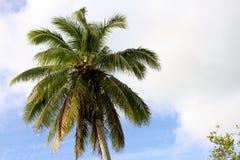 Palmträd i paradis Arkivfoto
