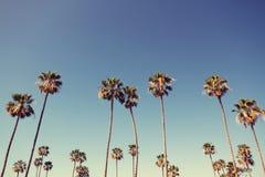 Palmträd i Retro stil Arkivfoto
