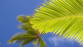 Palmträd i semesterorten stock video