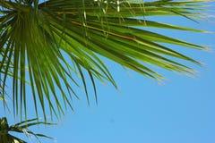 Palmträd i semesterorten Fotografering för Bildbyråer