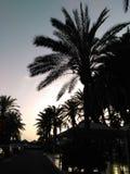 Palmträd i skuggorna Fotografering för Bildbyråer