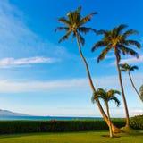 Palmträd i solljus på Maui Hawaii Arkivbilder