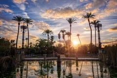 Palmträd i solnedgången i Maria Luisa parkerar i Seville, Spanien royaltyfri bild