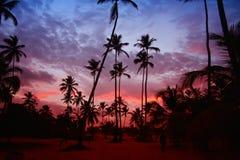 Palmträd i solnedgången på den karibiska kustlinjen Arkivbild