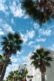 Palmträd i staden arkivfoton