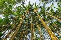 Palmträd i staden parkerar Arkivfoton