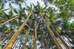 Palmträd i staden parkerar Royaltyfri Foto