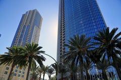 Palmträd i i stadens centrum San Diego, Kalifornien Arkivfoton