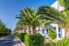 Palmträd i territoriet av hotellet Royaltyfri Bild