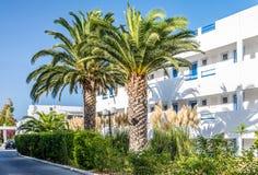 Palmträd i territoriet av hotellet Arkivbilder