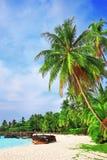 Palmträd i tropiskt gör perfekt stranden Arkivbild