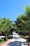 Palmträd i Turkiet Arkivbild