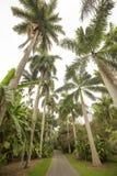 Palmträd i vår i södra Florida Arkivfoton