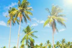 Palmträd i varm luft av den tropiska ön blå ljus sky för bakgrund Royaltyfria Foton