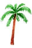 Palmträd i vattenfärg Royaltyfria Bilder