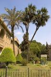 palmträd kopplar samman Royaltyfri Bild