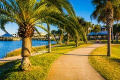 Palmträd längs en bana i Daytona Beach, Florida Arkivbilder