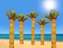 Palmträd med ananors Royaltyfria Foton