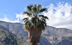Palmträd med berghorisont royaltyfria foton