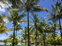 Palmträd med blå himmel och havet bakom Royaltyfria Foton
