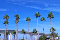 Palmträd med Clearwater den minnes- vägbanken i backgrouen royaltyfri foto
