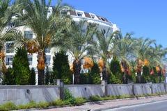 Palmträd med data Royaltyfri Bild